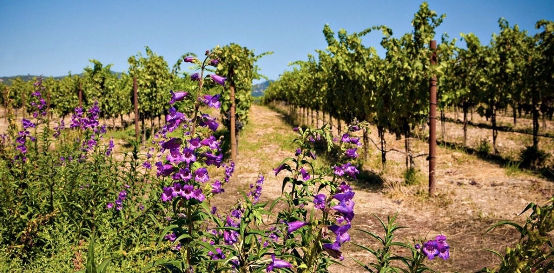 Our-Estate-Vyd-Hills-Penstemon-Insectary-Bees-13