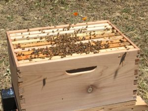 Flow Hive System
